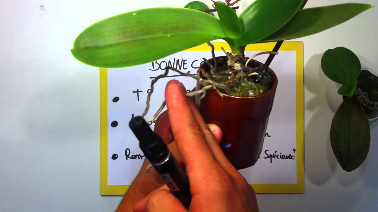 Blog pro lifestyle Comment entretenir orchidee